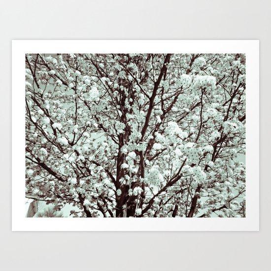 Winter Petals Art Print