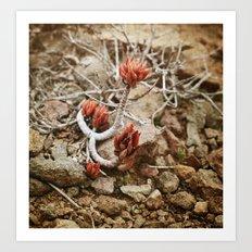 Fleur du désert Art Print