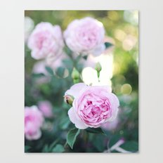 Magic Hour Roses Canvas Print