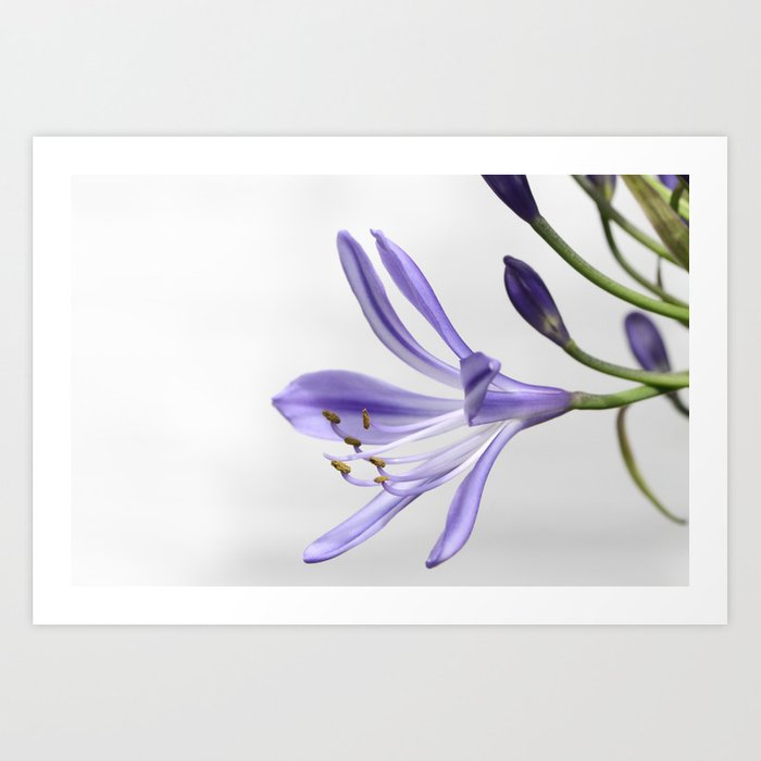 purple lily Art Print