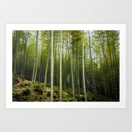 Bamboo Forest in Green Art Print