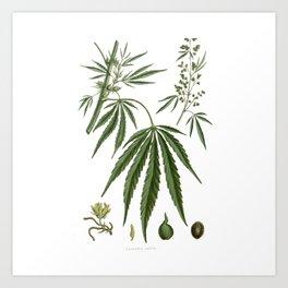 Cannabis Ativa Kunstdrucke