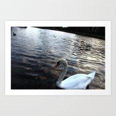 Swan in Lake Art Print