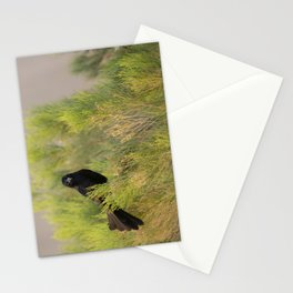 Great-tailed Grackle (Quiscalus mexicanus) perches in a Coyote Bush (Baccharis Pilularis) at sunrise Stationery Cards