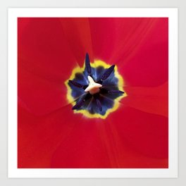 Seeing red (at tulip time) Art Print
