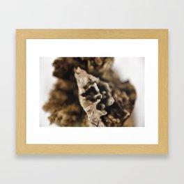 Brokentree Framed Art Print