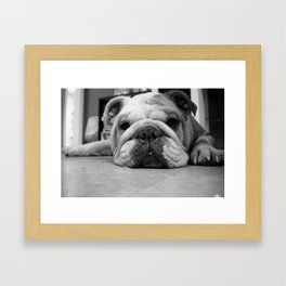 Black and White English Bulldog Photography Framed Art Print