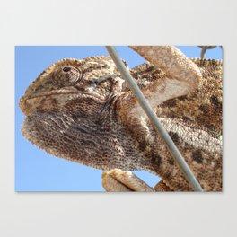 Close Up Of A Climbing Chameleon Canvas Print