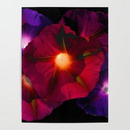 Morning Glory V Poster