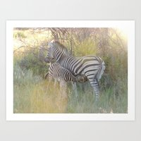 Zebra in Africa Art Print