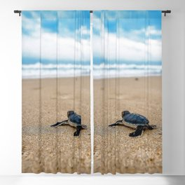 A sea turtle baby aiming at the sea Blackout Curtain