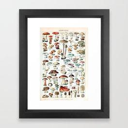 Adolphe Millot - Champignons pour tous - vintage poster Framed Art Print