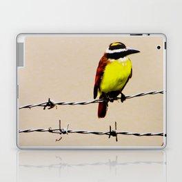 Kiskadee Laptop & iPad Skin