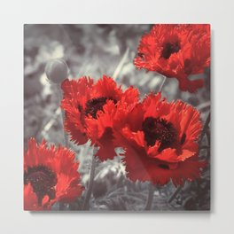 Big Red Watercolor Poppies on Grey Background Metal Print