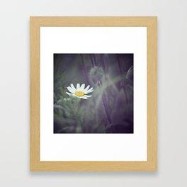 Miss Daisy Framed Art Print