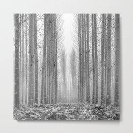 Poplars beauty. Misty morning. Spain Metal Print