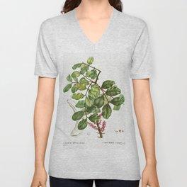 carob tree (Ceratonia siliqua) from Traite des Arbres et Arbustes que lon cultive en France en plein Unisex V-Neck