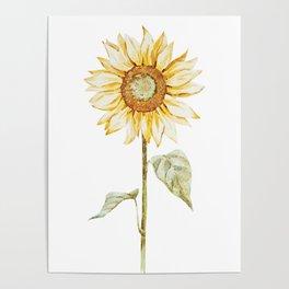 Sunflower 01 Poster