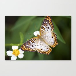 Furry Butterfly Canvas Print