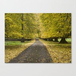 Lime tree avenue Canvas Print