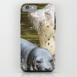 Harbor Seal Sweetness iPhone Case