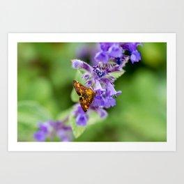 Mint Moth Art Print
