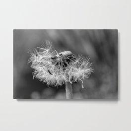 Bokehlicious black & white dandelion Metal Print