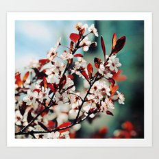 Beautiful Spring Art Print