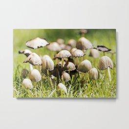 Shaggy Ink Cap Mushrooms 2 Metal Print