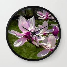 Magnolia flowers in the backyard Wall Clock