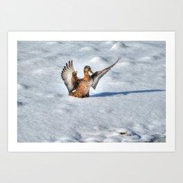 Happy Landing - Mallard Duck in Snow Art Print