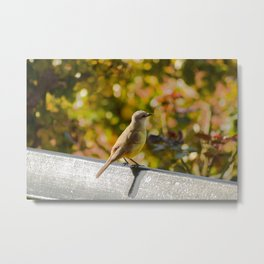 Little Bird Sitting On A Bench Metal Print