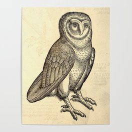 Antique Barn Owl Poster