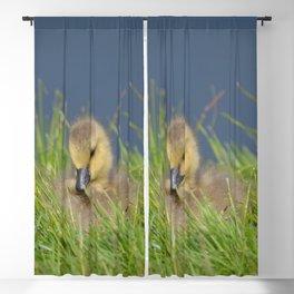 Fluffy Blackout Curtain