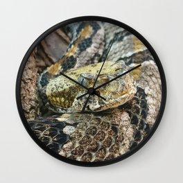 Timber Rattlesnake Close Up Wall Clock