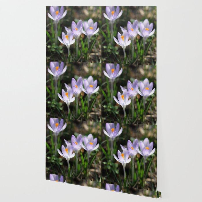Crocus Wallpaper