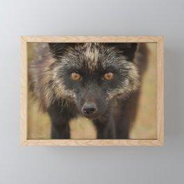 Amber Eyes Framed Mini Art Print