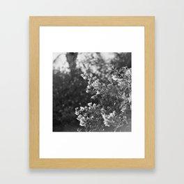 Flowers in Film Framed Art Print