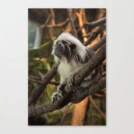 Wise Old Monkey Canvas Print