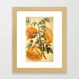 Fortunes Double Yellow rose Framed Art Print