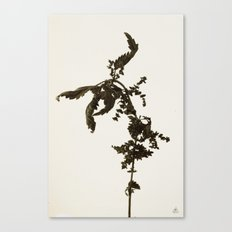 Florales · plant end 5 Canvas Print