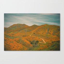 California Poppies 032 Canvas Print