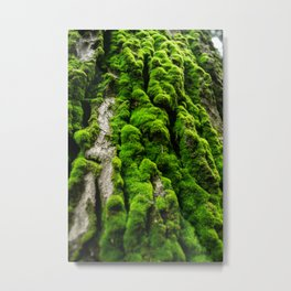 tree musk bark Metal Print