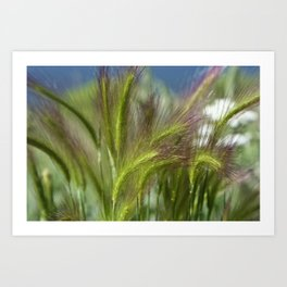 Ripened cheatgrass in green and pink Art Print