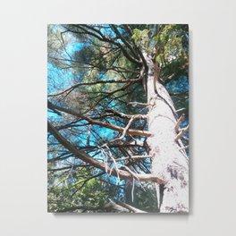Whit Pine Metal Print