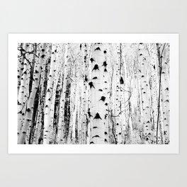 The Trees in Black & White Art Print