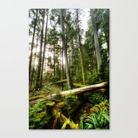 forrest Canvas Prints featuring Forrest by ILIA PHOTO + CINEMA