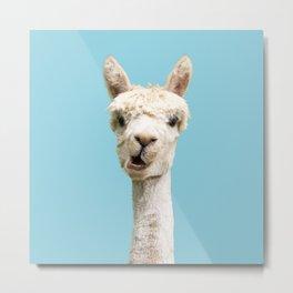 Cute alpaca portrait on blue sky illustration Metal Print