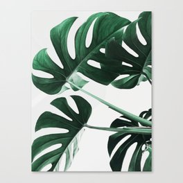 Monstera, Leaves, Plant, Green, Scandinavian, Minimal, Modern, Wall art Canvas Print