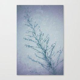 Seeds of Weeds in Vintage Blue Canvas Print